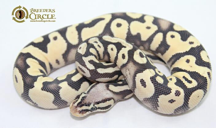 PastelSahara1